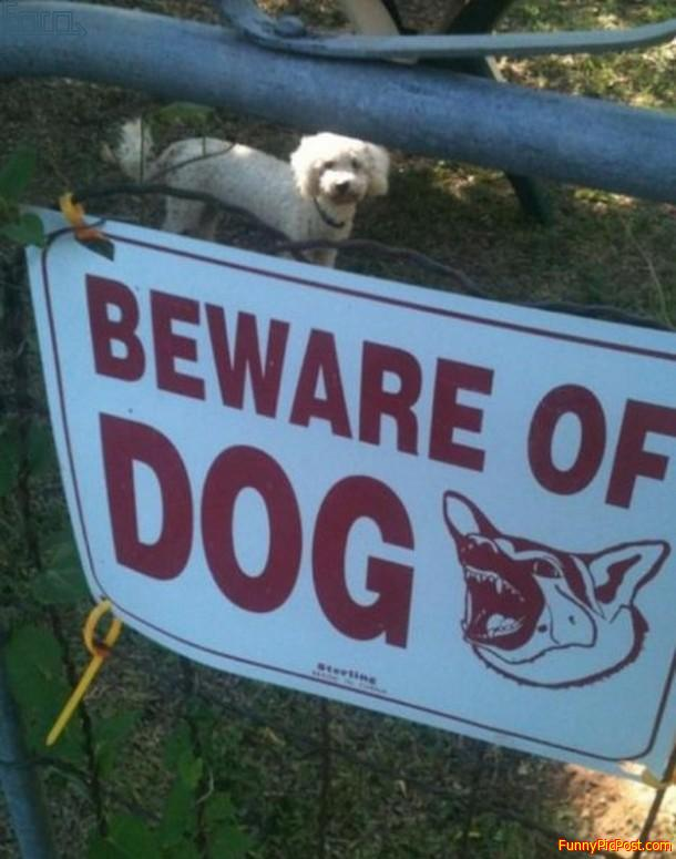 Beware  of  the  other  dog .